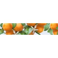 "Кухонный фартук АБС ""Спелые мандарины"""