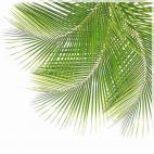 """Защитное стекло """"Листья пальмы"""" 600*600*4 мм"""