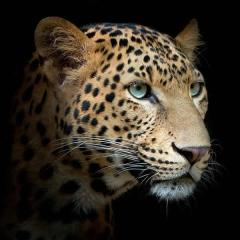 "Защитное стекло ""Леопард"" 600*600*4 мм"