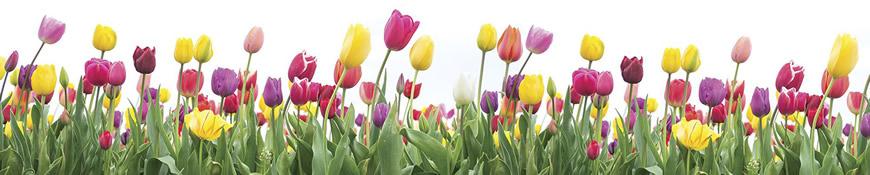 Кухонный фартук АБС Море тюльпанов