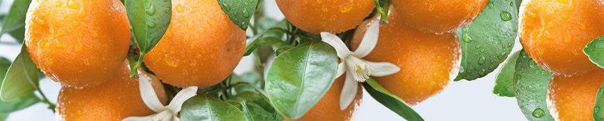 Кухонный фартук АБС Спелые мандарины