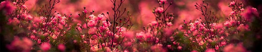 Кухонный фартук АБС Кустовая роза