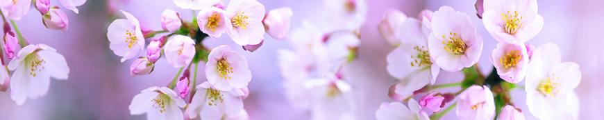 Кухонный фартук АБС Розовые соцветия