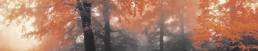 Кухонный фартук АБС Осенний лес