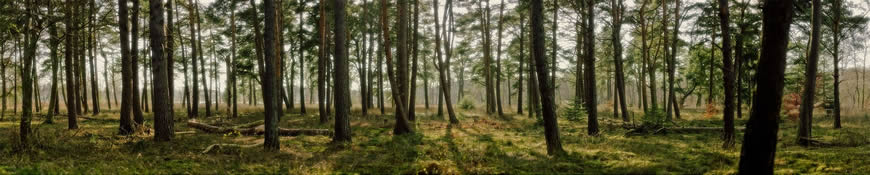 Кухонный фартук АБС Пробуждение леса