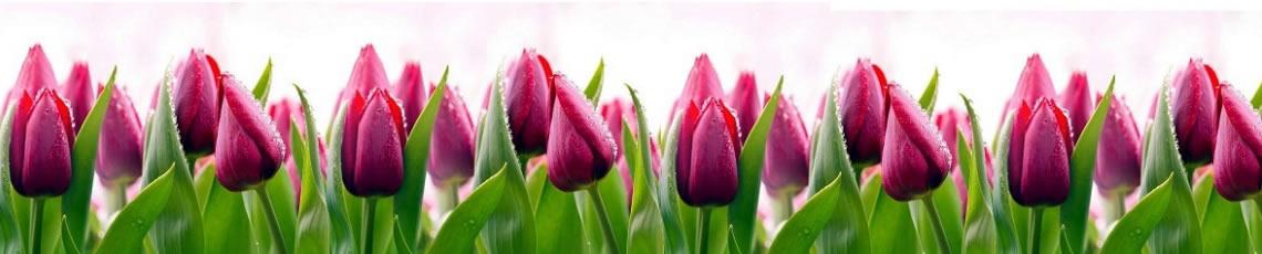 Кухонный фартук АБС Тюльпаны
